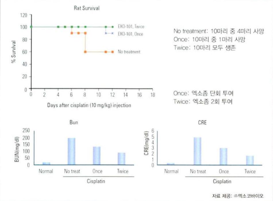 Hình 3-15: Ciplastin-induced Rat AKI: ModerateCase