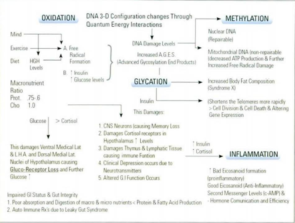 Hình 16-1 Cơ chế lão hóa