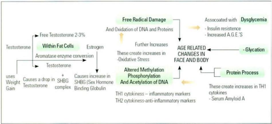 Hình 16.2 Mối quan hệ của cơ chế lão hóa và dấu hiệu của lão hóa