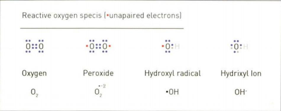 Hình 16.19 Oxy hoạt hóa ROS Reactive Oxygen Specis