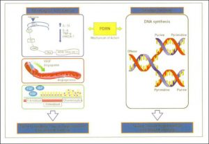 "Hình 26-2 PDRN Mode of Action: Activation of Adenosine A2 Receptors and the ""Salvage Pathway"""