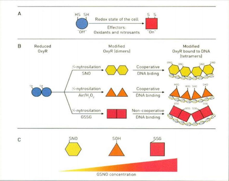 Hình 16.16 Sơ đồ lý thuyết chuyển đổi chất của Glatathione