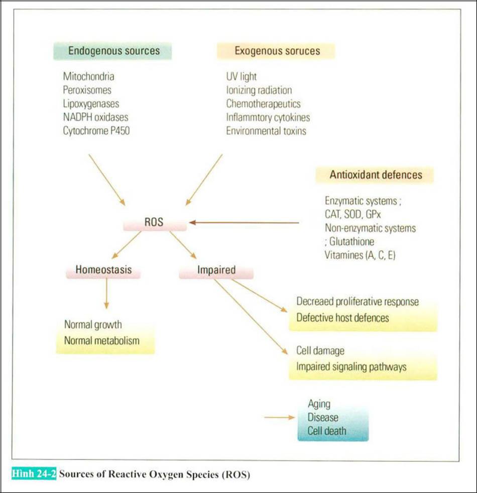 Hình 24-2 Sources of Reactive