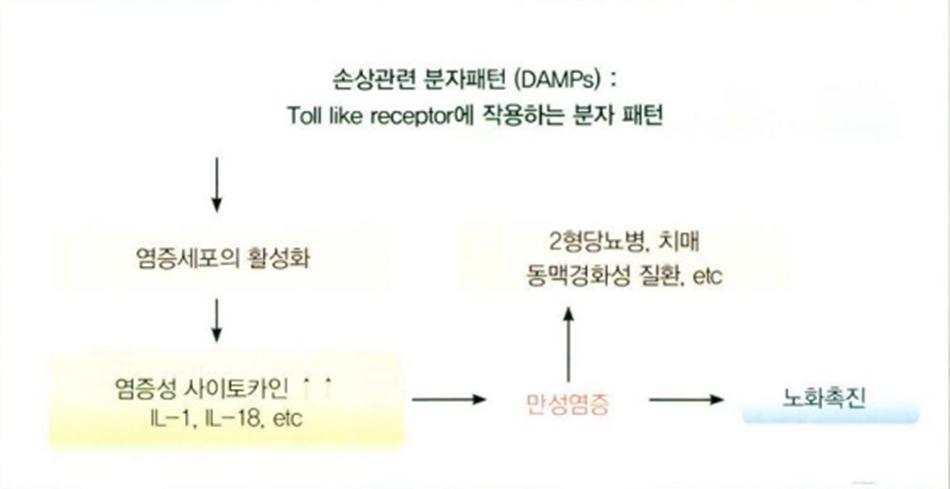 Hình 16.11 Sự thúc đẩy lão hóa của Toll LIke Receptor
