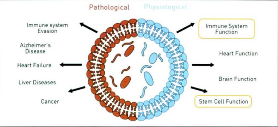 Hình 3-12: Công dụng của Exosome