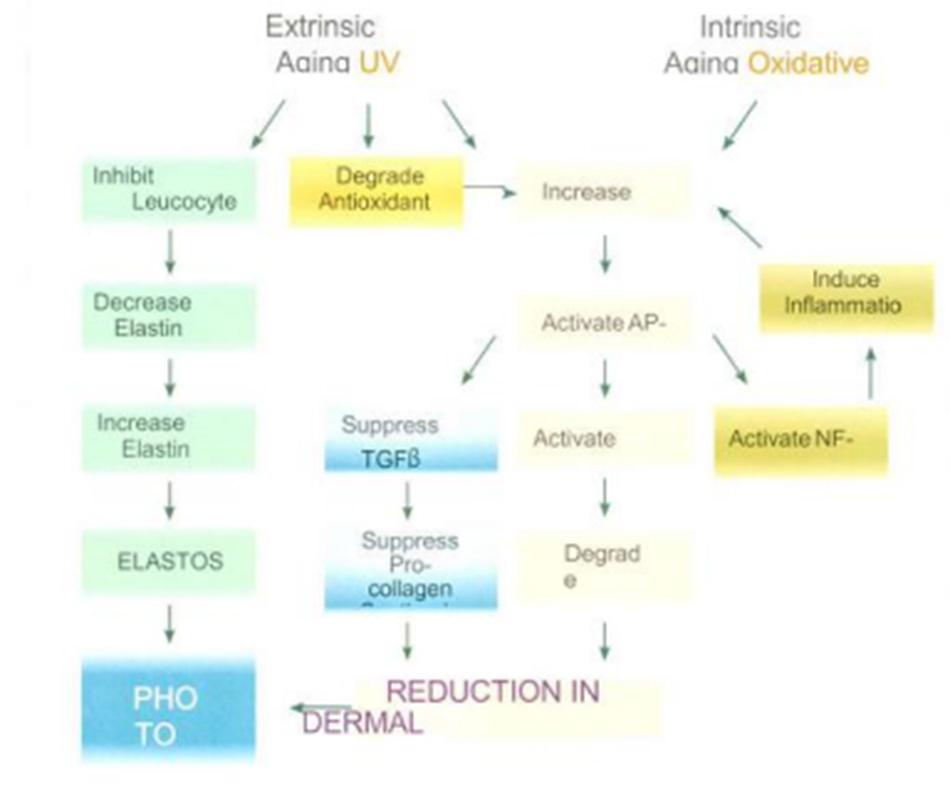Hình 1-6 Intrinsic and Extrinsic Aging
