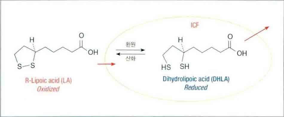 Hình 6-5 Sự sản sinh và di chuyển của DHLA dihydrolipoic acid