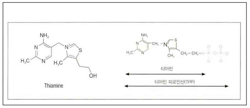 Hình 6-7 Cấu trúc của Vitamin B1