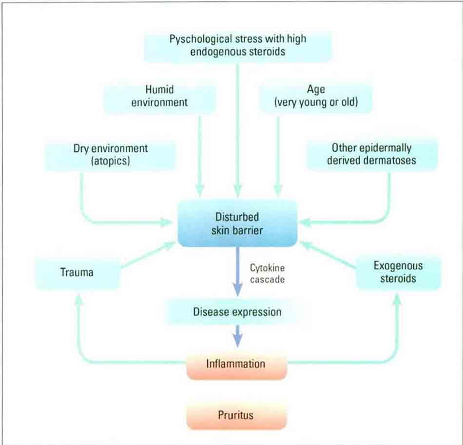 Hình 10-1 Do Endogenous và Exogenous Insult nên phát sinh bất thường ở Skin Barrier Funtions. Điều này gây viêm da dị ứng và các triệu chứng vẫn còn tồn tại