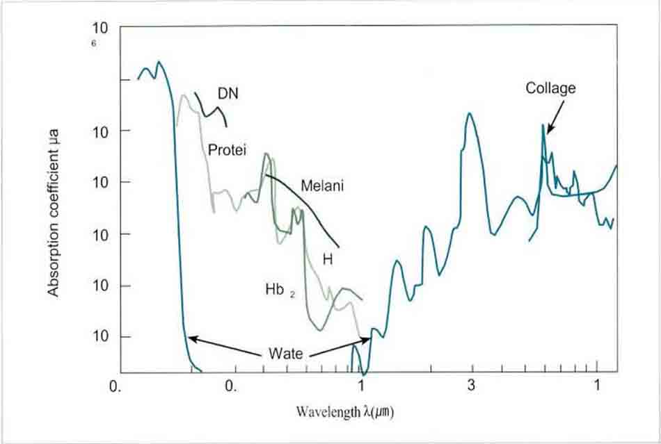 Hình 14-2 Optical Absorption Coefficients of Important Biological Chromophores in the 0.1 to 12 μm Spectral Region