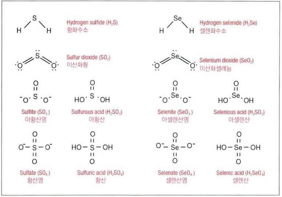 Hình 6-15 Các thuật ngữ cấu trúc phân tử của lưu huỳnh vô cơ nhóm 6 và selen vô cơ